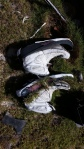 Sneakers Garden