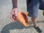 Stranded Conch