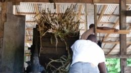 Crushing Sugar Cane